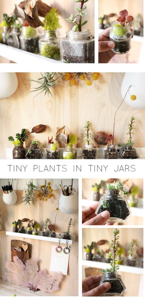 Tiny-plants