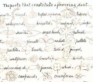 Wildflowersc